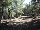 Young Canyon Rd, Cloudcroft, NM 88317