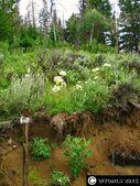Lot 17 Pines At Elk Ridge Ests, Dubois, WY 82513