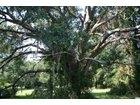170 Winding Creek Drive, Pawleys Island, SC 29585