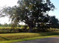 Lot 16 Post Oak Run, Magnolia, TX 77355