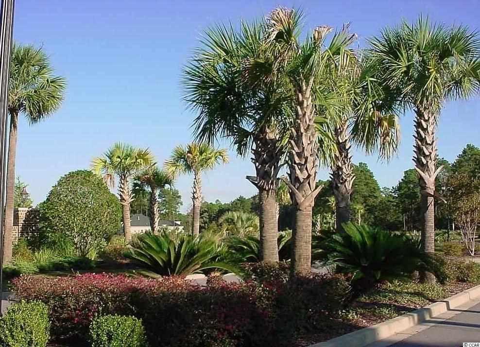 203 Sago Palm Dr Myrtle Beach Sc