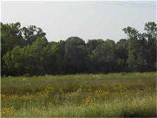 Highway 59 N, Shepherd, TX 77371