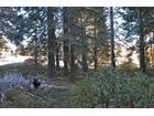 Pinnacle Ln, Shaver Lake, CA 93664