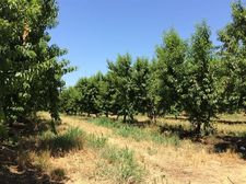 Ord Ranch Rd, Gridley, CA 95948