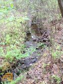 01 County Road 37, Muscadine, AL 36269