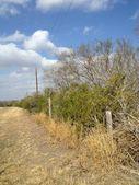 Skidmore, TX 78389