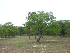 E Grape Creek Rd, Fredericksburg, TX 78624