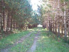 11675 5 Mile Rd, Evart, MI 49631