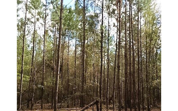 sw 90th blvd jasper fl 32052 home for sale and real