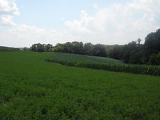 Kelly Rd, Scales Mound, IL 61075