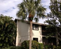 1600 Ne Dixie Hwy Apt 11-204, Jensen Beach, FL 34957
