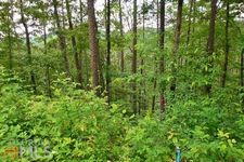 The Woods Rd, Mineral Bluff, GA 30559