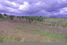 13 Rosete Ct, Patagonia, AZ 85624