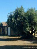 Corning, CA 96021