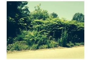 Lynwood St, Fall River, MA 02722