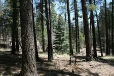 15 County Road 2072, Alpine, AZ 85920