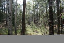 8 County Road 2064, Alpine, AZ 85920