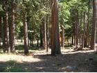 Opal Lane, Lot 76, Shaver Lake, CA 93664
