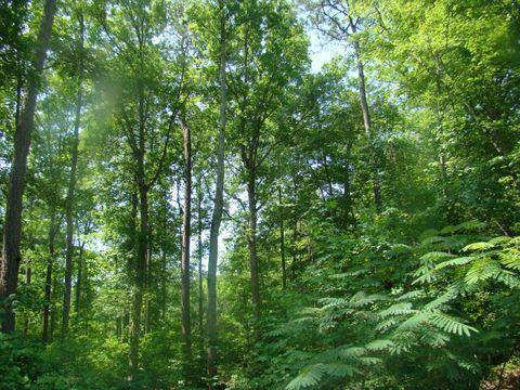 Photo of Birch Dr Lot 10, Blounts Creek, NC 27814