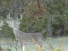 112 County Rd, TX 78834