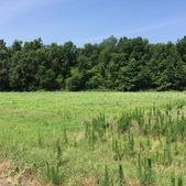 Guess Rd, Greeleyville, SC 29056