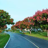 2682 Garden Dr S Apt 206, Lake Worth, FL 33461