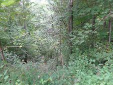 Orchard Hill Rd, Beaver, WV 25813