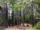 6 Acres, Lot 30, Shaver Lake, CA 93664