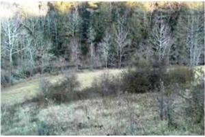 Lot 31 Waters Edge Lane, Marshall, NC 28753