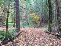 20ACRE Pine Creek Rd, Hoopa, CA 95546