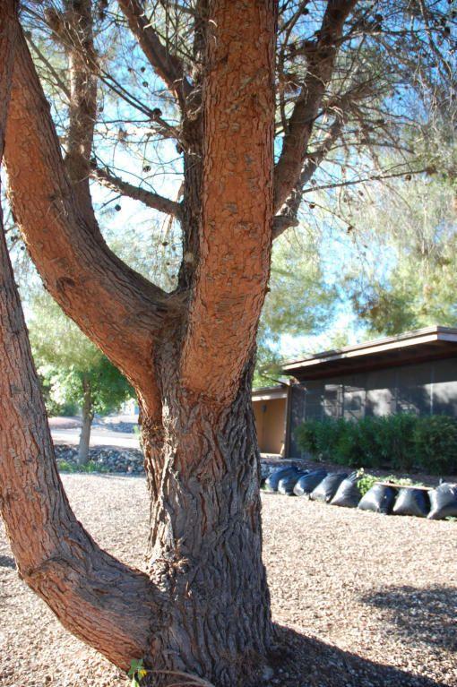 907 E Desert Jewel Dr Cottonwood Az 86326 Realtor Com 174