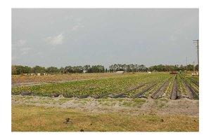 No Address, Plant City, FL 33567